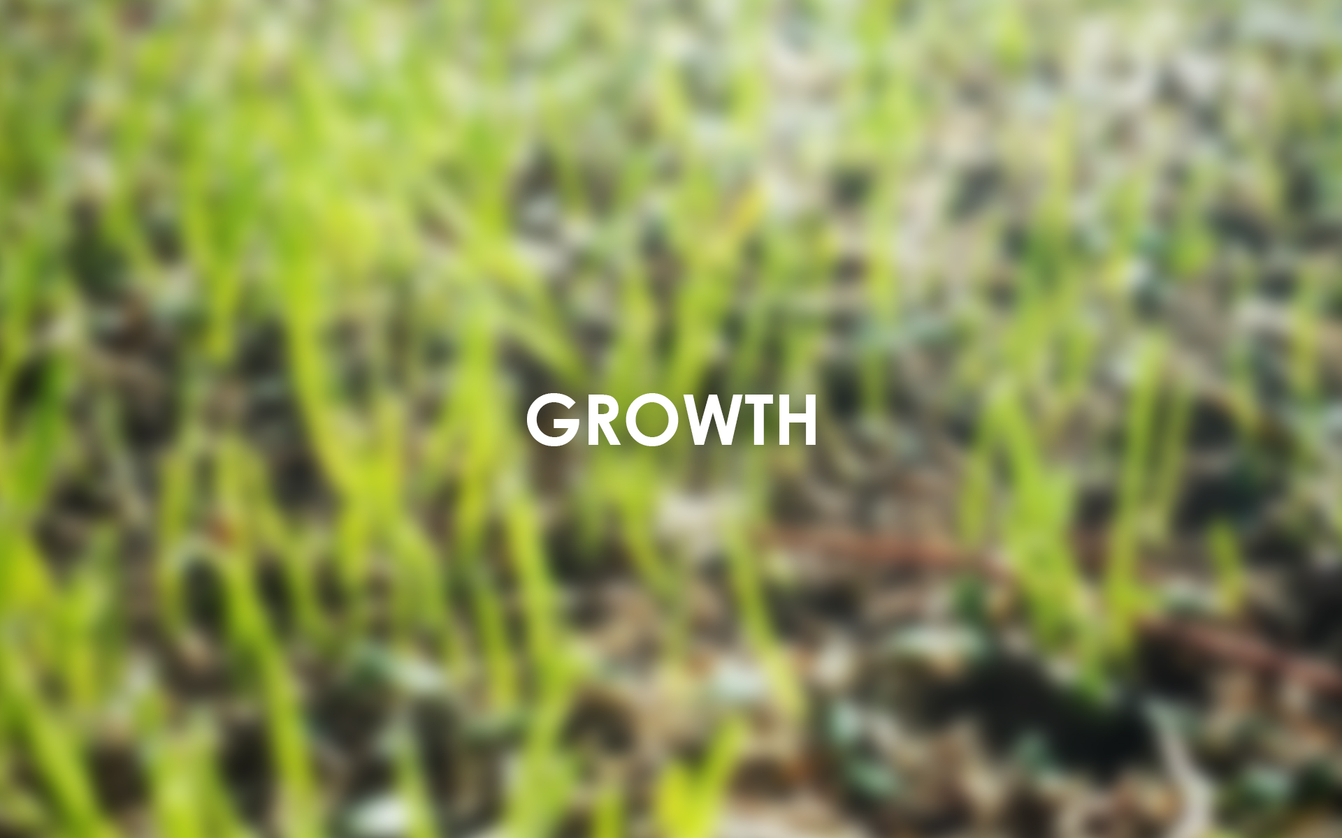 ABC Wallpaper growth